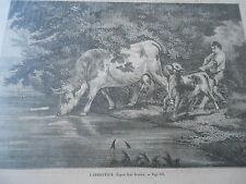 Gravure 1862 - L'abreuvoir La Vache et le veau