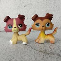 LPS 1262 Hasbro Littlest Pet Shop Puppy Rare Mauve Plum Cream Collie Dog Blythe