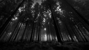 Black And White Forest Trees Nature Woods Large Wall Art Framed Canvas Pictures