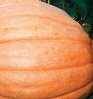 Pumpkin - Dills Atlantic Giant - 10 Seeds