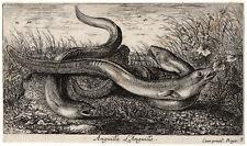 Antique Master Print-LANDSCAPE-EEL-Flamen-ca. 1650