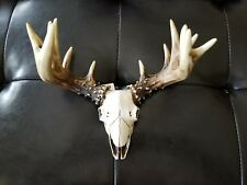 Southwestern Skull Large Antlers Wall Sculpture Animal Totem Home Decor Man Cave