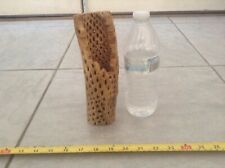 """New listing 8"""" Strong Thick Pc Organic Teddy Bear Cholla Wood *Fish* Shrimp*Cleaned&Boiled"""