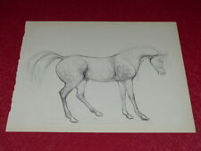 [EQUITATION CHEVAUX HORSES] DESSIN ORIGINAL ANCIEN Crayon Mine Plomb Pencil (17)