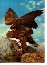 Fierce Hawk Bird Ready to Fly-3-D Xograph Scene-Unusual Vintage Novelty Postcard