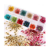 Pop 12 Colors Manicure Nail Art Decor Case DIY Dried Small Flowers Floral Tools