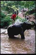 147062 Chiang Mai Mae Sa Elephant Taking Shower A4 Photo Print