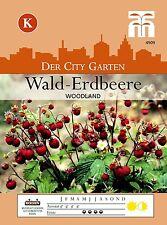 Walderdbeere 'Woodland' - Fragaria vesca var. vesca, Wald-Erdbeeren Samen 4909