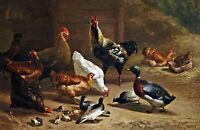 Poultry stable interior by Archibald Thorburn. Bird Art Repro on Canvas or Paper