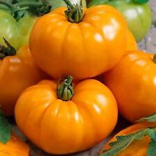 Tomato Orange Giant Seeds Vegetable Plants Organic Seeds Home Garden Bonsai