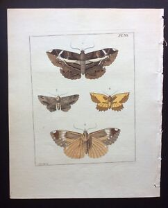 VERY RARE 1770 Dru DRURY Vol. I FOUR LEPIDOPTERA Handcolored/Copper Plate XX