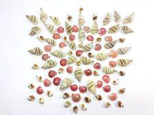 90 Mix Mini Natural Thai Seashells Craft Decorations Small Sea Shell 10-20mm