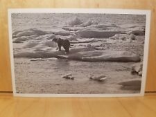 E12) Postcard POLAR BEAR Canada's Eastern Arctic ice flow swim Hudson Bay Co