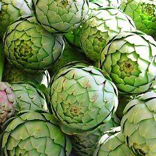 Artischocke•200 Samen/seeds•Cynara cardunculus scolymus 'Green Globe'•Artichoke