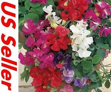 Sweet Pea ROYAL FAMILY MIX 25 SEEDS E89, Lathyrus Fragrant Flowers Tall Vines