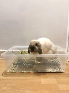 Bunny Rabbit Cat Litter Tray Rack