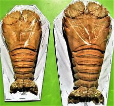 Slipper, Flathead or Bay Lobster Thenus orientalis FAST SHIP FROM USA