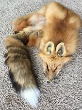 XXL Heavy Red Fox Pelt Fur Tanned Top Quality Log Cabin Decor Wild Country Furs