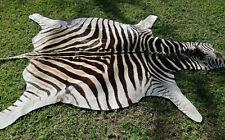 Genuine Zebra hide skin rug  - A  grade South African Burchell Zebra hide - A703