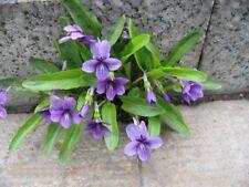 Purple flower violet Perennial Flower seed 50 seeds Viola philippica Violaceae