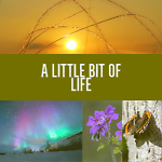 A Little Bit Of Life