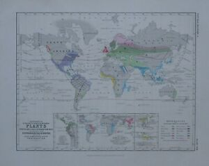 1850 HAND COLOURED MAP WORLD PLANTS USED FOR FOOD TEMPERATURE ISOTHERES COFFEE