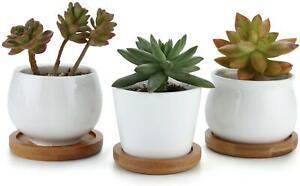 Home Decor 6pcs 7CM White Ceramic Mini Plants Pots Cactus Succulent Bamboo Trays