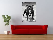 STAFFORDSHIRE BULL TERRIER STAFFIE DOG COOL GIANT ART PRINT PANEL POSTER NOR0020