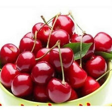New listing 20Pcs Red Cherry Seeds Organic Seed Fruit Seeds Bonsai Tree Home Garden Plant