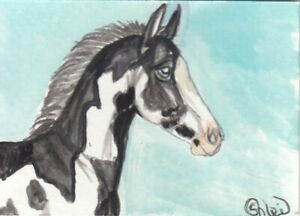 ACEO original Watercolor Art Card Horse black frame Overo LOUD weanling filly