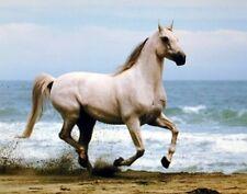 White Stallion Horse Running On Beach Animal Picture Art Print (8x10)