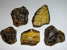 5pc #2 Raw Black Amber Fossils Crystal Healing gemstone Rough Specimen Stones
