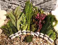 Aquariumpflanzen Set 10 XXL Bunde, Aquarienpflanzen, Wasserpflanzen, Dicke Bunde