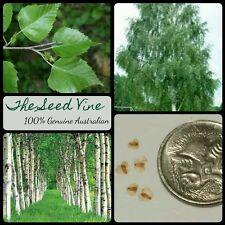 50+ SILVER BIRCH SEEDS (Betula pendula) Beautiful White Popular Deciduous Tree