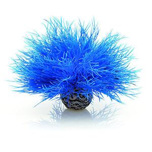 biOrb Aquatic Sea Lily - Blue