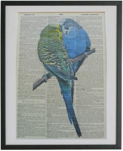 Budgerigar Bird Print No.267, budgie bird, dictionary art, bird prints, budgies