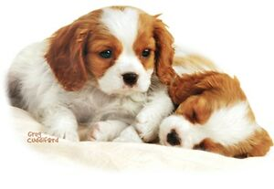 Cavalier King Charles Spaniel  T-Shirt, Two Puppies Snuggling, Small - 5X