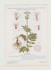 FICHE N° 46 PLANTE MEDICINALE/COMITE INTERMINISTERIEL-Ed.AUZOUX/ VALERIANE