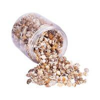 Shell Beads Sea Shells Beach Seashells Cowrie Shells Charms Kaud Kodi 21 pcs,,
