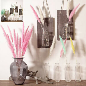 15 Pcs Dried Flowers Pampas Grass Phragmites For Home Store Wedding Decoration