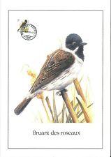 FDC 2425 - Oiseau Buzin sur gravure format A4 !