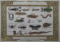 Insekten und Reptilien - Originaler Kupferstich von Baldwyn aus dem Jahr 1794