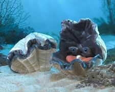 GIANT CLAM PUPPET 3067 NEW for 2016 ~ FREE SHIP/USA ~ Folkmanis Puppets
