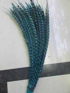 10-50 PCS Lady Amherst Pheasant feathers 80-90 cm decoration Performances
