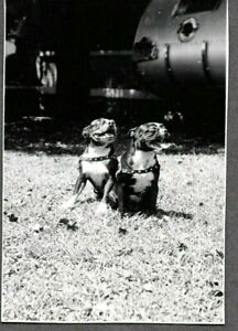 VINTAGE PHOTOGRAPH BASEBALL PLAYER LLOYD JOHNSON'S BOSTON TERRIER DOGS OLD PHOTO
