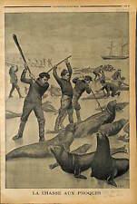 Chasse aux phoques Seal hunting MASSACRE DE 100 000 PHOQUES  TERRE NEUVE 1902