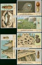 Termites Insect Pests Wood 6 1930s Trade Ad Cards