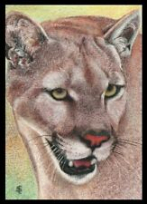 """COUGAR""  ACEO/ATC, ORIGINAL COLOURED PENCIL DRAWING."
