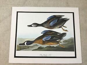 1964 Vintage Print Blue Winged Teal Audubon's Book of Birds of America LARGE