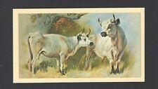 Player (Grandee) - British Mammals (Ltd) - #27 White Cattle